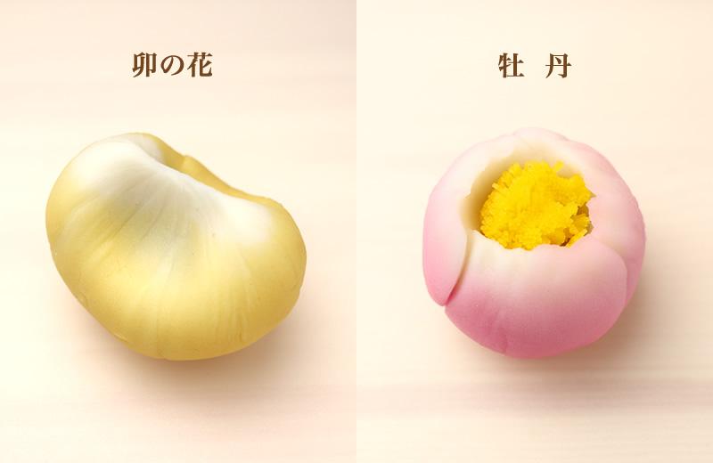 卯の花 牡丹