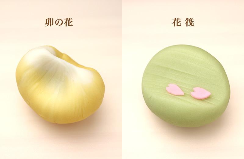 卯の花 花筏